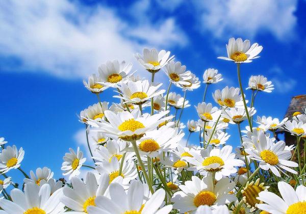 Bloemen tuinposter online kopen