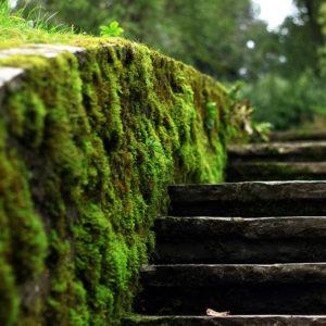 Doek brug met mos tuin online bestellen