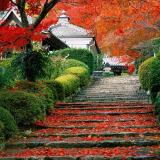 Doorkijkje online kopen tuin