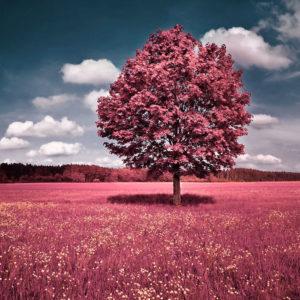 Tuinposter bestellen landschap